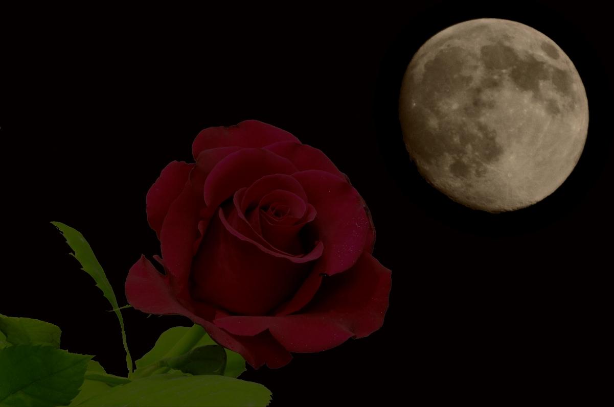 Картинка роза и луна