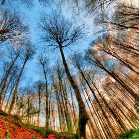 Ağaçlar Arasından