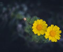 yellow ..