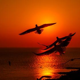 'Kuşlarını alıp gidiyor gök.''  İlhan Berk