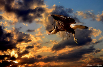 Flying in the sunset II