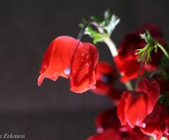 Kırmızı / Red