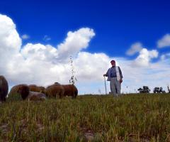 Çoban ve Kuzuları