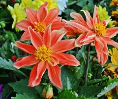 Her çiçek doğada açan bir ruhtur