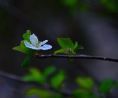 Erik Çiçeği 2