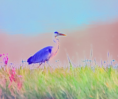 Kuş Cenneti'nden