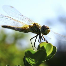 dragonfly..