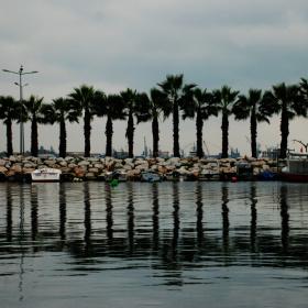 Kavaklı Marina Palmiyeler & Yansıma