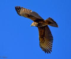 See my wings XIV
