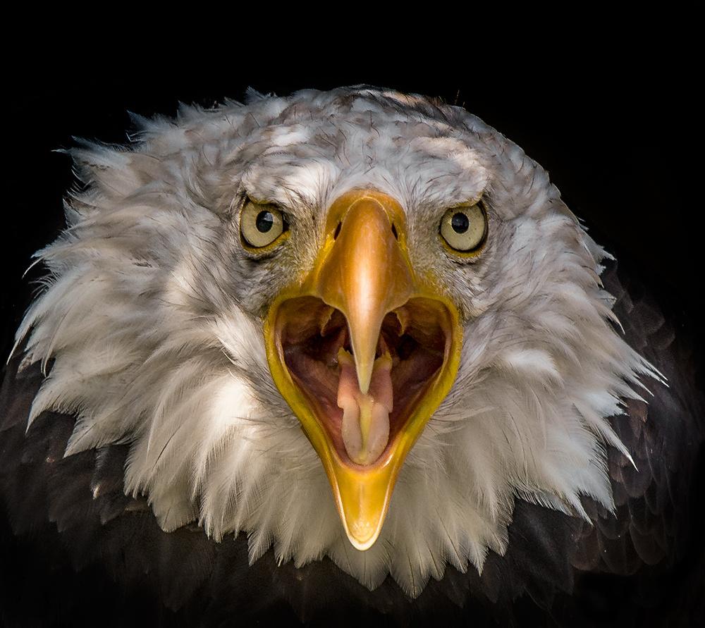 Angry Bird ;)