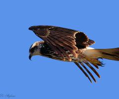 Overflying