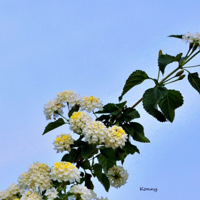 kelebek & flowers