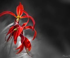 Liz flower