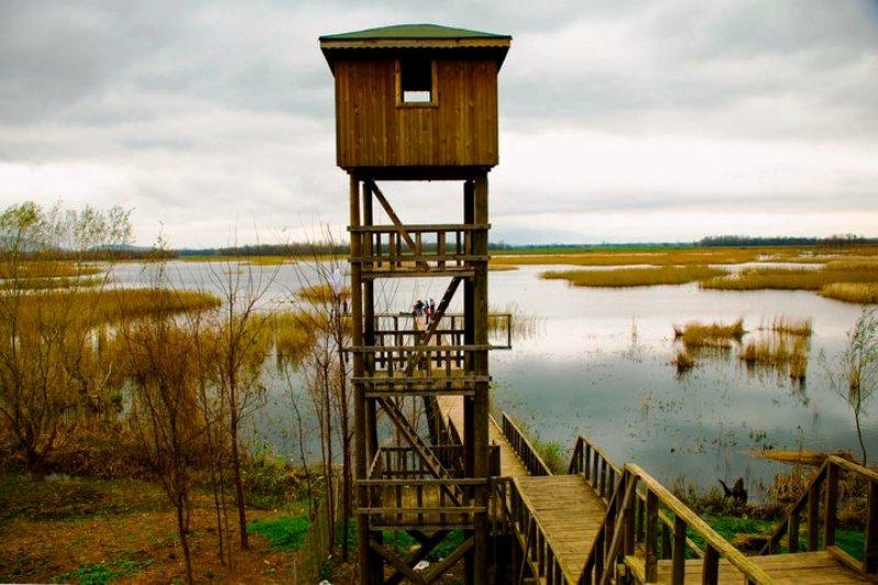 Efteni Gölü & Kuş Seyir Kulesi