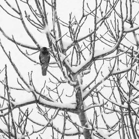 Kış ve Kuş