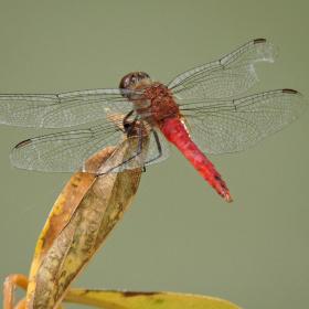 Wings Details