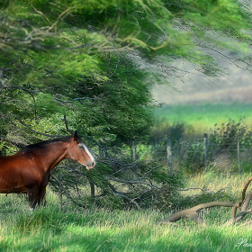 Campestral picture