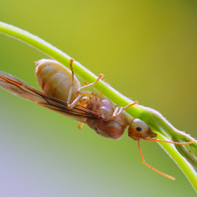 Big ants