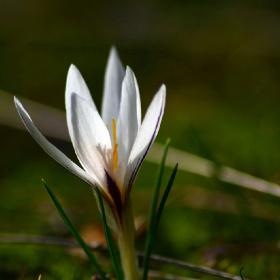 Baharın Habercisi