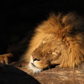 Sleepy King