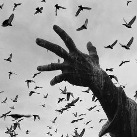 ... ::: Ellerimde Kuşlar ::: ...