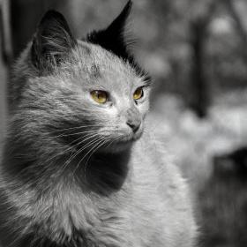 #white #cat #black