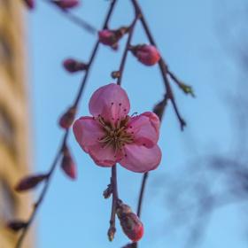 İlkbahar...