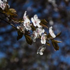 Bahar Gelmiş Hoş Gelmiş