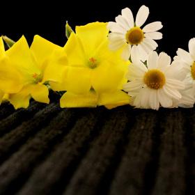 Bahar'ın  Güzelleri...