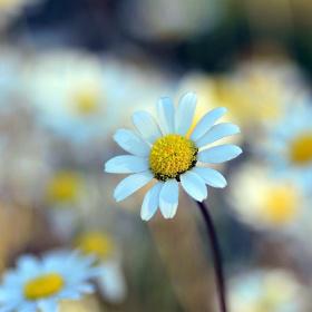 Bugünün Çiçeği