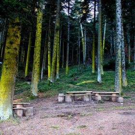 Orman Gölcük