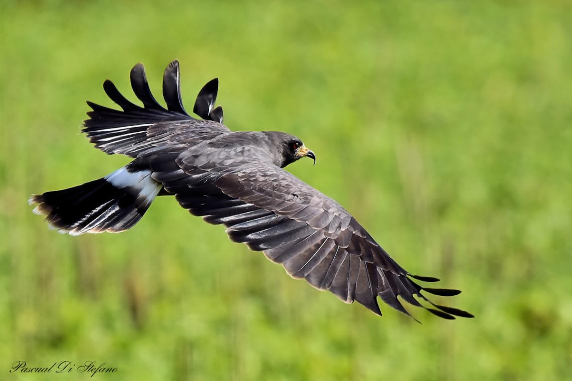 Flying in black