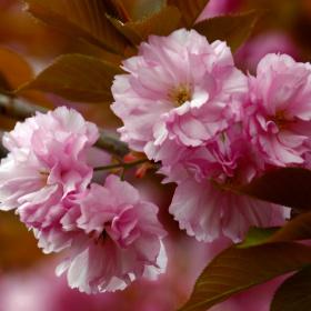 Bahar Yeniden doğmaktır