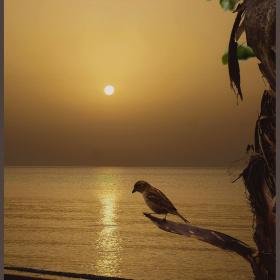 Sunrise and bird