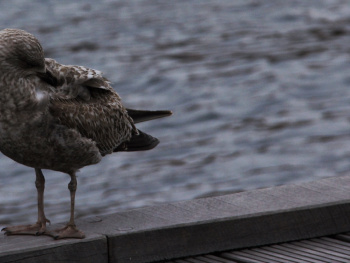 A seagull moment