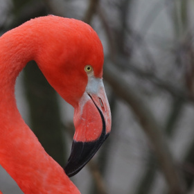 Close to a flamingo