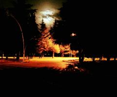 LG NIGHT