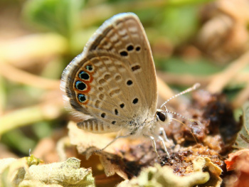 Kelebeğe 5 mm kala