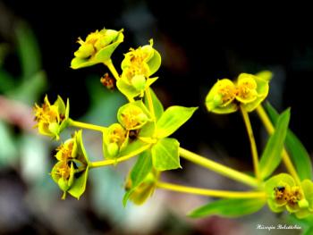 Sarının Tonu
