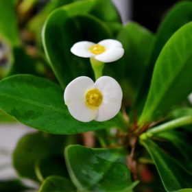 White Spring 3