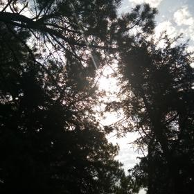 Güneş ve ağaçlar