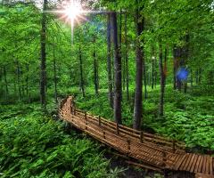 Artvin\ Borçka \ Karagöl Yeşilin Ana vatanı