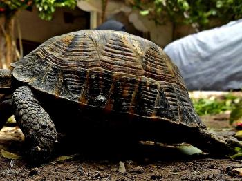 Run turtle Run......