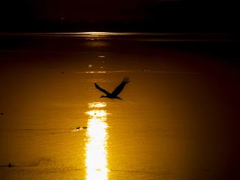 Gölyazı Sabahı