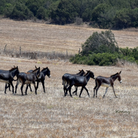 Wild donkeys in Cyprus ..