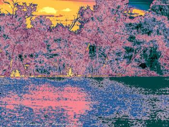 An Arizona Infrared Evening
