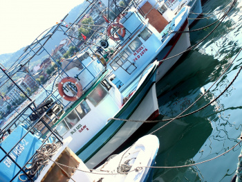 Tekneler....