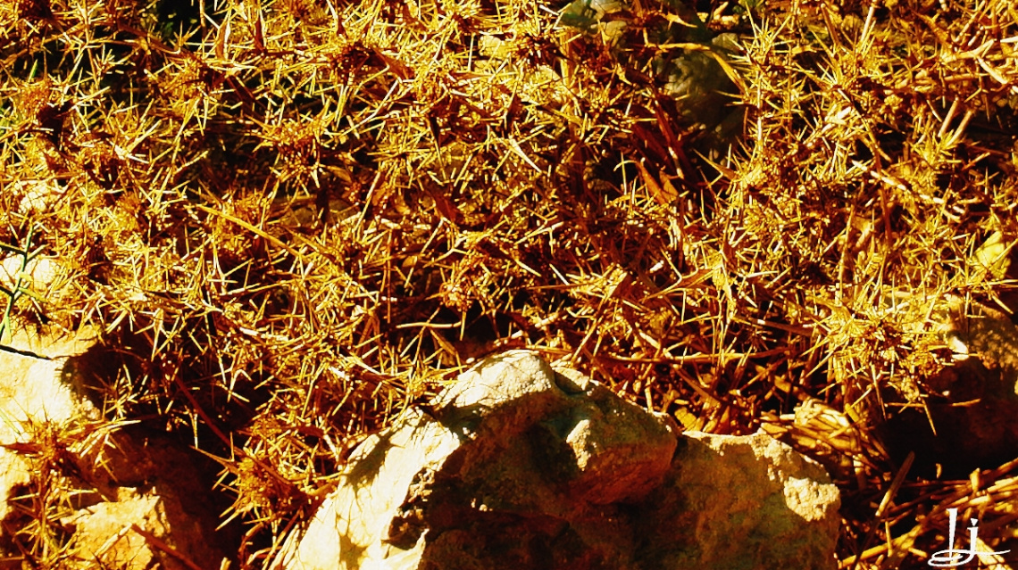 Thorny abstract