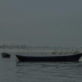 Kuşlar, Sandallar