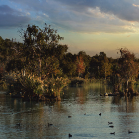 Seyhan River, Bird Habitats